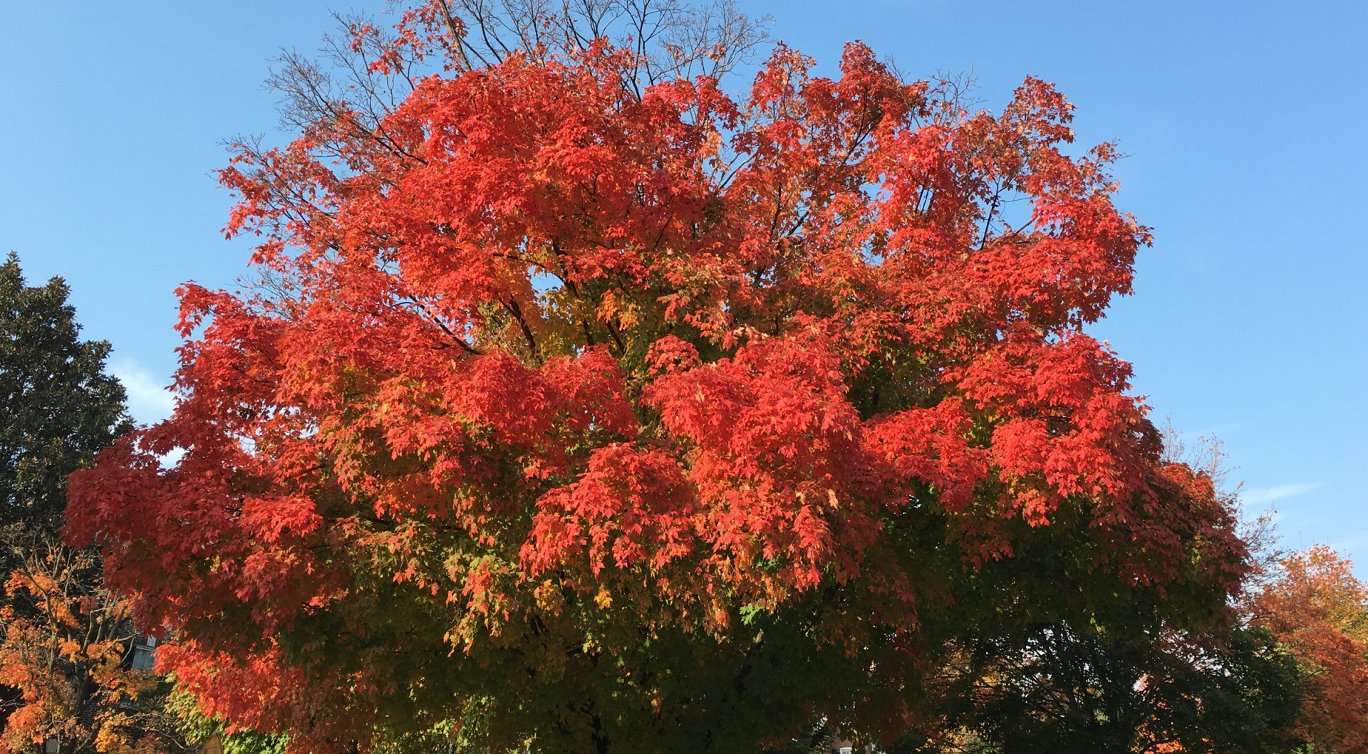 red-fall-leaves
