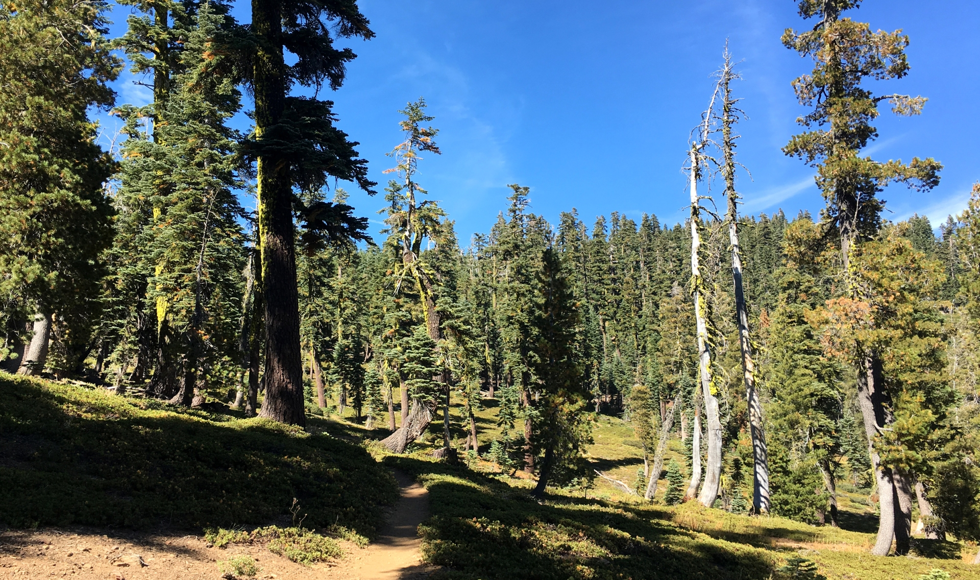 Mossy trees, hiking trail, conifer forest
